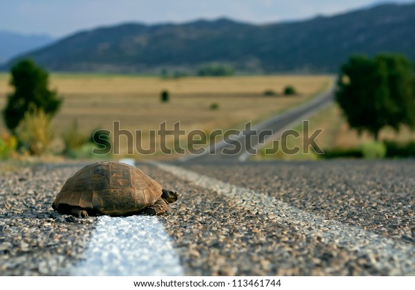 Turtle on the rural road