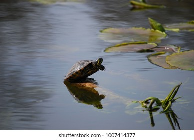 turtle on start