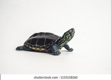 turtle on white background .