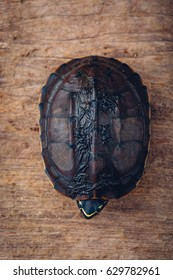 turtle on wooden table