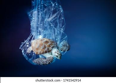 Schildkröte in Plastiktüte im Ozean. Problem der Verschmutzung durch Plantagen. Weltmeer-Tageskonzept. Umweltkonzept