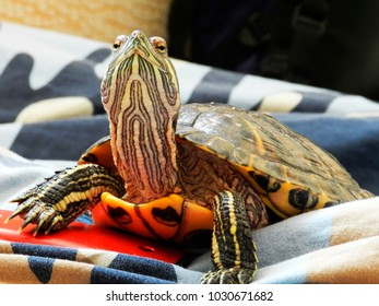 turtle proudly looks up