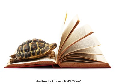 turtle reading a book on white background