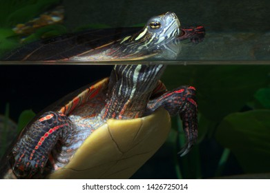 turtle reptile wildlife shell aquatic water reflection