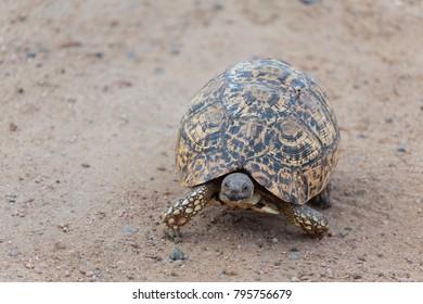 Turtle running iamge