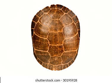 Turtle shell, isolated.