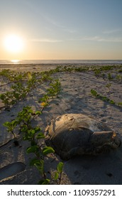 Turtle shell laying on empty beach during beautiful sunset in the Casamance, Senegal, Africa