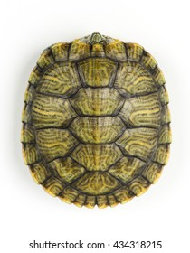 Turtle shell pattern on a white background.
