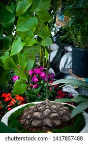 turtle shell plant elephant foot