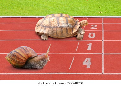 Turtle and Snail effort running competition sport on red rubber track near finish line with numbering year 2014. The result is wining Tortoise concept of business completed.