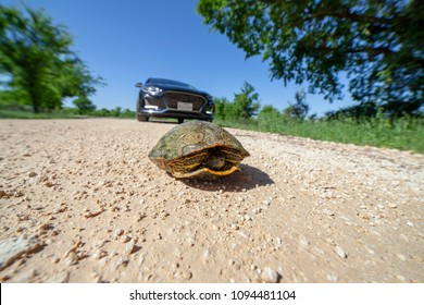 Turtle stuck in the road