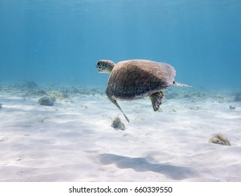 Turtle swimming in blue sea