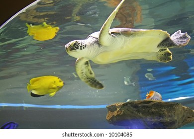 turtle swimming with the fish