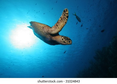 Turtle swimming out of the sun