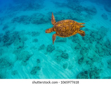 Turtle Swimming over the Reef