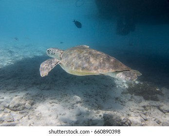 Turtle swimming under a boat
