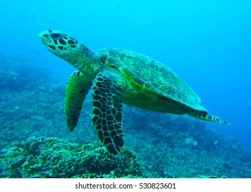 Turtle thinking in Indonesia