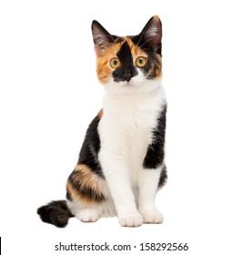 Three Color Cat Images Stock Photos Vectors Shutterstock