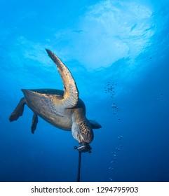 Turtle and underwater camera.