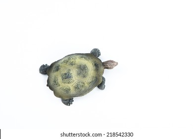 turtle view from above on white background