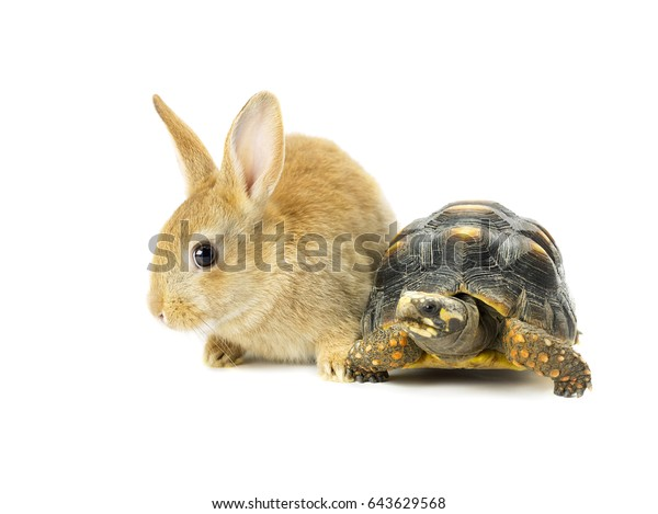 Turtle vs rabbit race business concept
