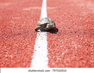 turtle walking down a red track in a concept of racing or getting to a goal no matter how long it takes