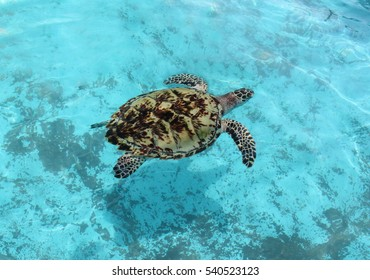 The turtle in the water