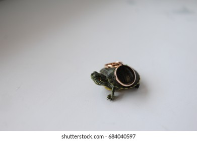 Turtle And Wedding Rings Images Stock Photos Vectors Shutterstock