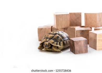 Turtle and wooden cubes on a white background