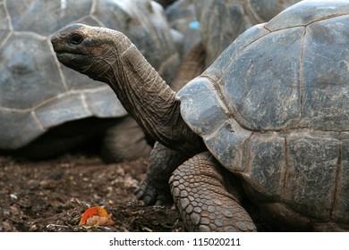 Turtle in Zanzibar