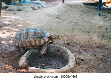 Turtle in the zoo.