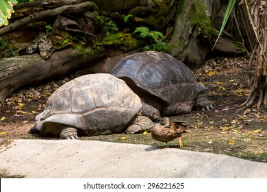 Turtle in a zoo