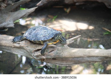 turtle in zoo