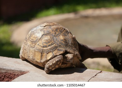 The turtle in the Zoo Zimbabwe, animal, reptile, natural fauna. Taking care of animals in Africa Zimbabwe.