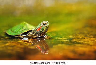 turtle,animals,macro,wild,stage,color,fauna,bokeh