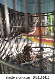 turtledove bird cage with dirt accumulated