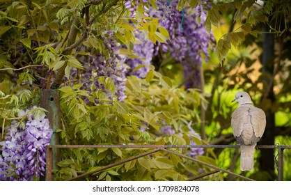 turtledove in magical flower frame