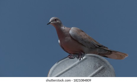 turtledove on top of fireplace