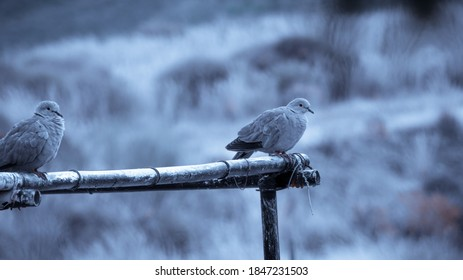 turtledoves on various seasons photo for designs, edits and info articles