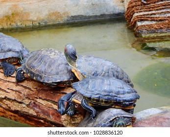 Turtles in Banerghatta National Park, Bangalore India