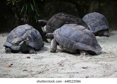 Turtles go about their business, Singapore, South East Asia