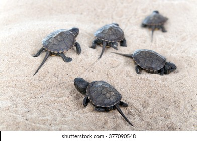 Turtles hatched from eggs in the sand.