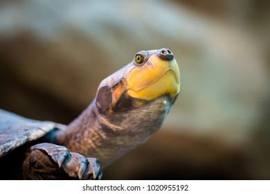 Turtle's head close up macro