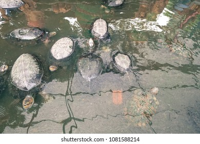 Turtles live longer than human.