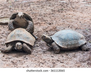 Turtles are mating