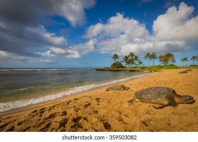 Turtles on Haleiwa Beach
