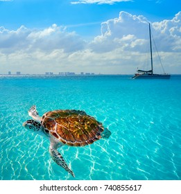 Turtles photomount in Caribbean Isla Mujeres of Mexico