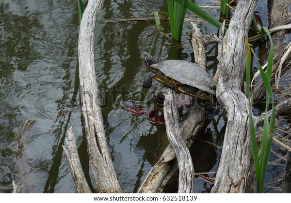 Turtles are resting beside a pond in a city park in Boise, Idaho.