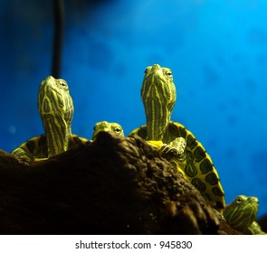 Turtles warming themselves under lamp