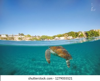 turtles at Westpunt  Views around the small Caribbean Island of Curacao